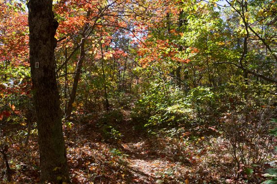 RED/GREEN trail with fall foliage