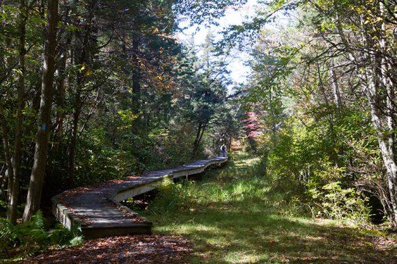 Long boardwalk over a swamp