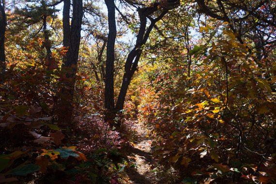 Scrub oak turning colors along the Monument Trail