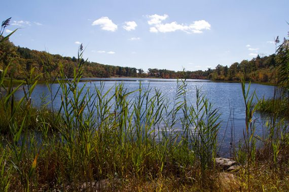 Lake Marcia with tall grasses in the foreground