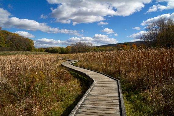 Boardwalk through Pochuck Valley