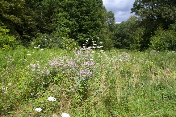 Meadows on the Farm Trail