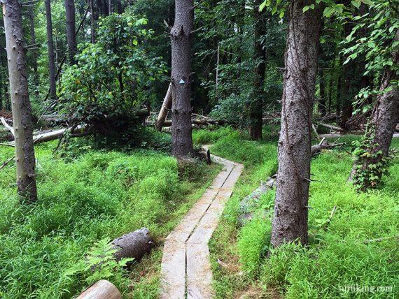 Plank boardwalk zig zagging through trees and green grass