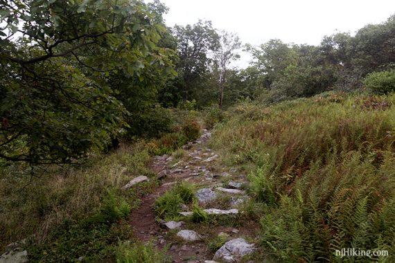 Rocky Appalachian Trail