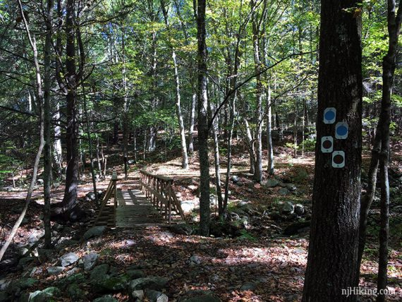 Old trail blazes under the new Blue Mtn ones