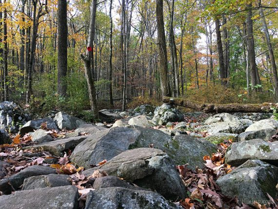 Rocks of the Roaring Brook Trail