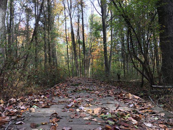 Boardwalk on the ridge trail