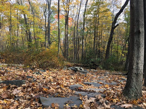 Flat rocks on the trail