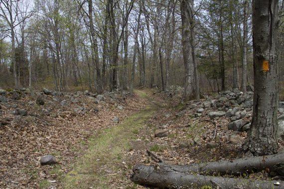 Orchard Trail (Orange)