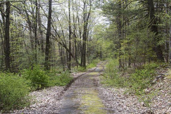 Hamilton Ridge Trail(BLUE)