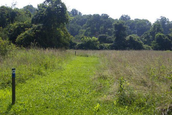Mowed trails