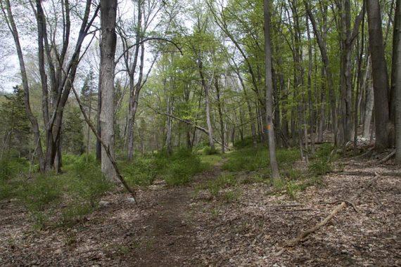 Pioneer Trail (Orange)