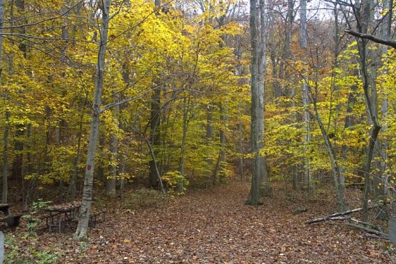 Hiking trail with yellow foliage
