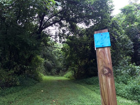 Square trail markers
