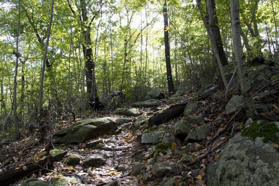 Hewitt-Butler and Highlands Trail