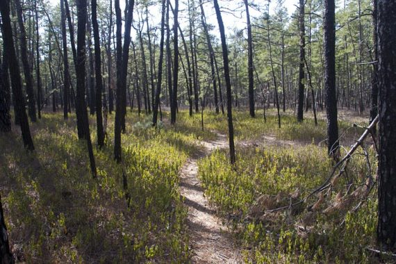 GREEN Wilderness Connector trail