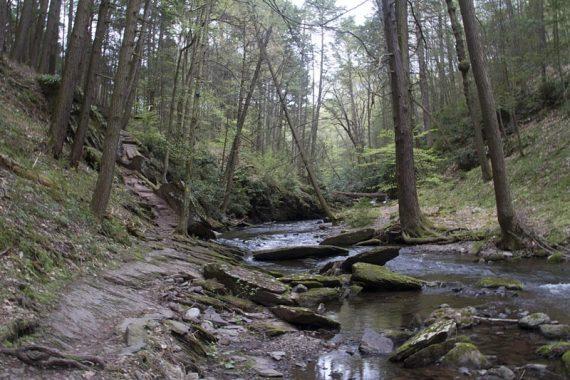 Van Campens Glen Trail (YELLOW)