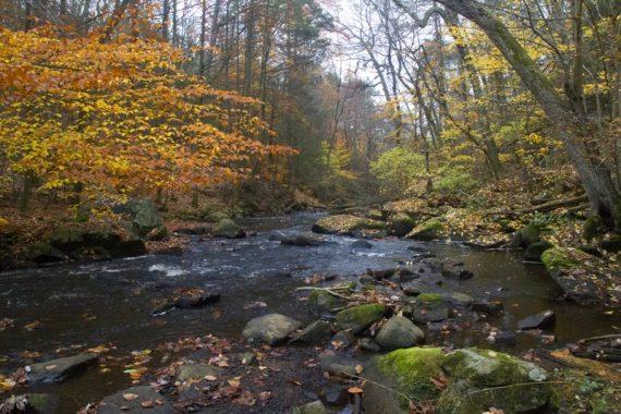 Yellow, orange, and green foliage around a rocky stream