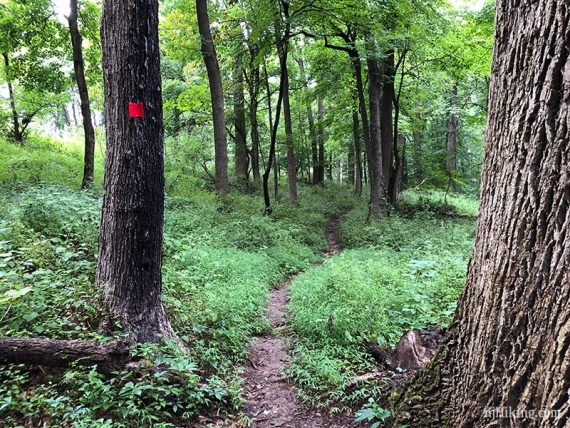 Red marker on the Ravine trail