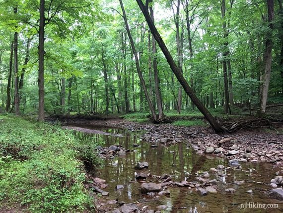 Trail continues along the creek