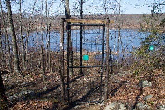 Gate through a deer fence.