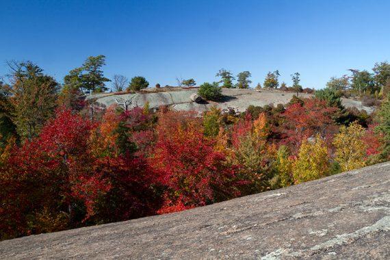 Fiery red low foliage along open rock slabs on a trail