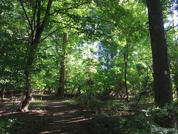 Shore Line Trail (WHITE)
