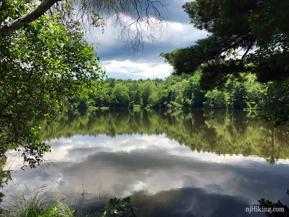 Pond surrounded by trees