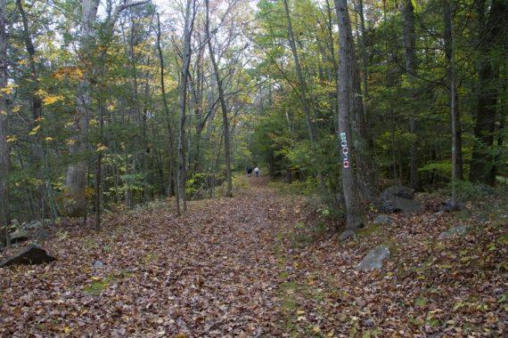 Five trails start at the same trailhead.