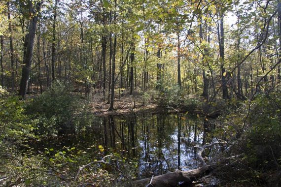 Wet area along Appalachian Trail