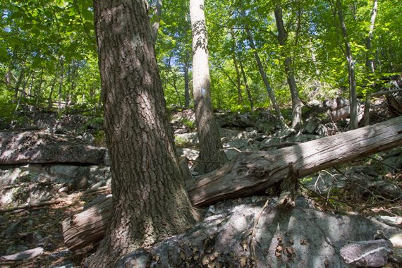 Rocky trail with fallen trees
