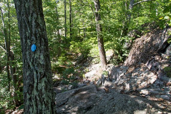 Very rocky trail with a blue trail marker on a tree