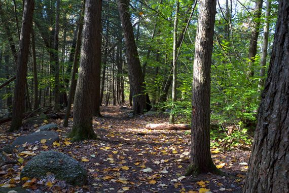 The trail through Tillman Ravine