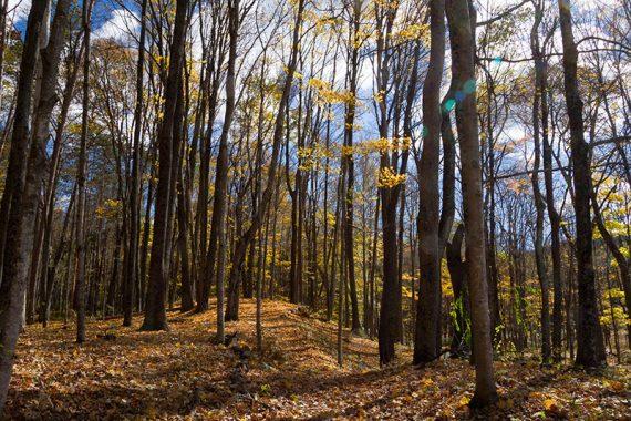 Cemetery trail