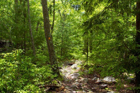 Quail trail