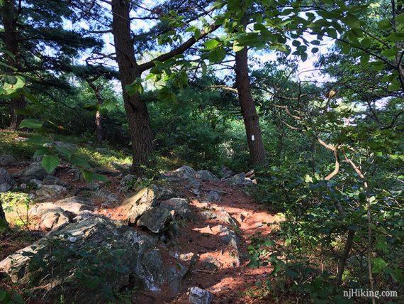 Hiking the Appalachian Trail, south.