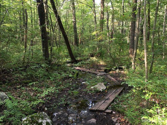 Planks over wet trail