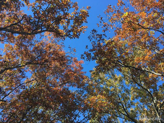 Fall foliage in the pine barrens
