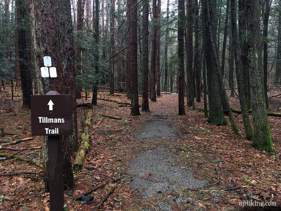 Tillmans Trail sign and white blazes on a tree