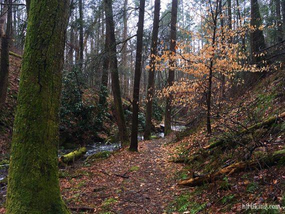 Trail in a ravine next to a stream