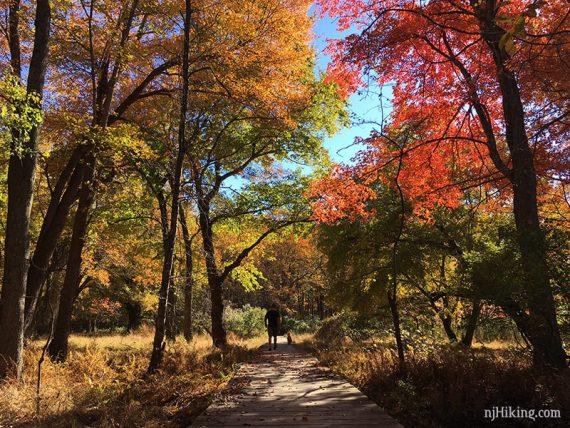 NJ Fall Foliage | njHiking com
