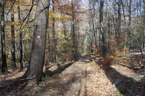 Conifer Pass trail