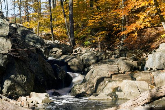 Water cascading over rocks surrounded by yellow and orange foliage