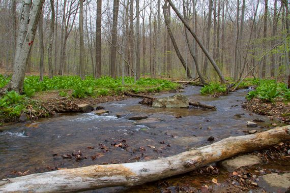Stream where the Primrose Trail crosses Grand Loop