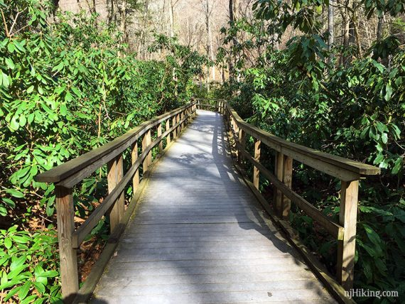 Rhododendron thickets on either side of a boardwalk trail