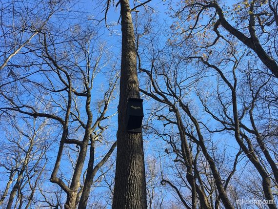 Bat boxes high in a tree