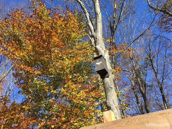 Bat box above trailhead