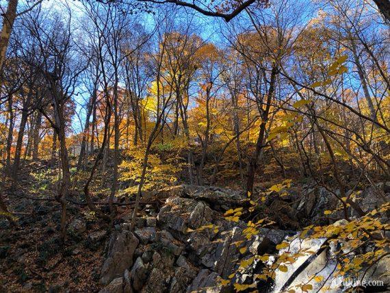 Yellow fall foliage seen above rocks and a waterfall