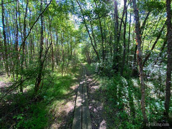 Long plank boardwalk on a trail