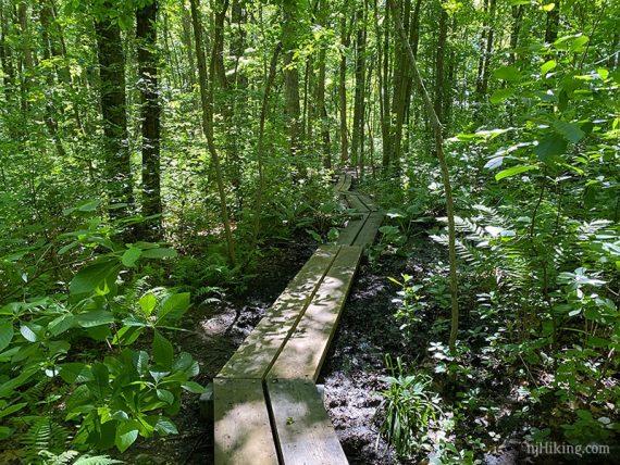 Boardwalk zig zagging through thick vegetation